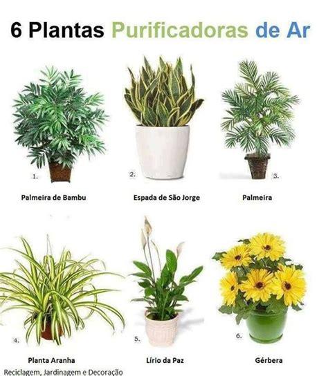 FENG SHUI DAS FLORES E PLANTAS | ESPÍRITOS DA MATA