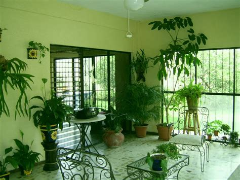 Feng Shui e plantas de interior