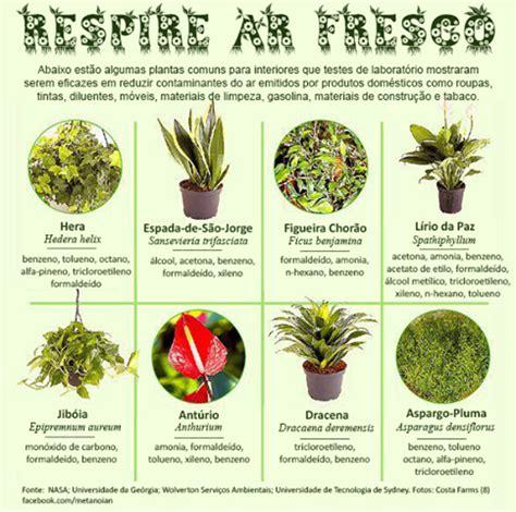 Feng Shui Ideias: Plantas purificadoras do ar