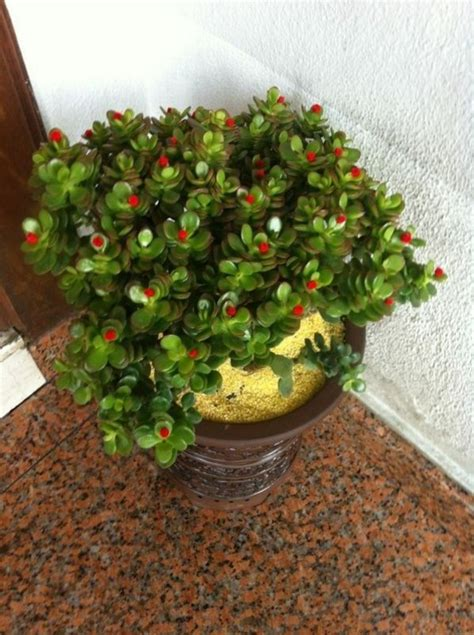 Feng Shui Plant For Harmony And Positive Energy In The ...