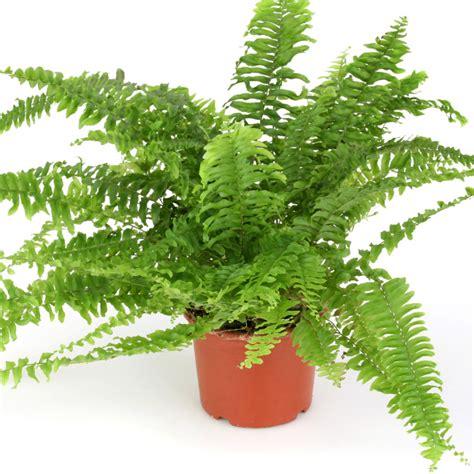 Feng Shui Plantas Positivas. De Feng Shui Y Plantas ...