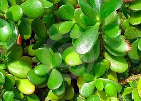 Feng Shui Plantas Positivas. Shares. Las Plantas Que ...