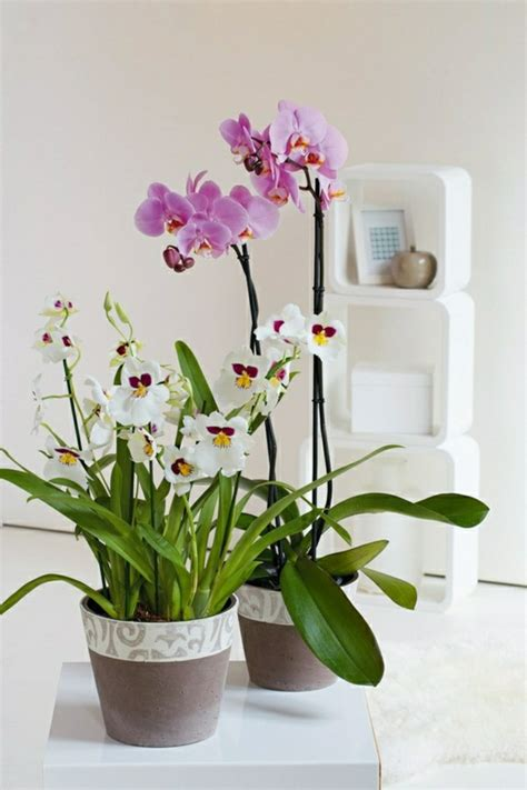 Feng Shui Plants: About The Protection And Convenience Of ...