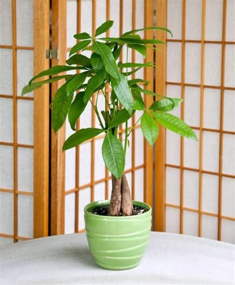 Feng Shui plants for harmony and positive energy in the ...