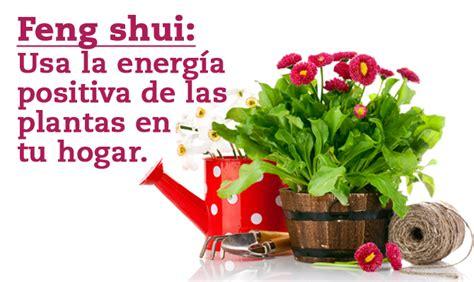 Feng Shui:Usa la energía positiva de las plantas en tu ...