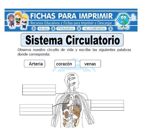 Ficha de Sistema Circulatorio para Primaria - Fichas para ...