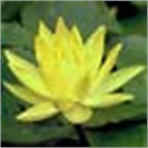 Fichas de Plantas Acuáticas por Nombre científico