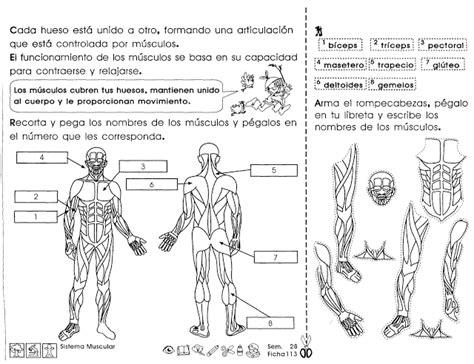 Fichas de Primaria: Ficha del sistema circulatorio