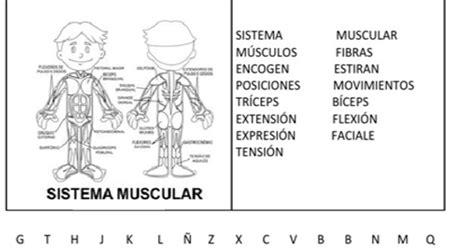 Fichas de Primaria: Ficha del sistema muscular
