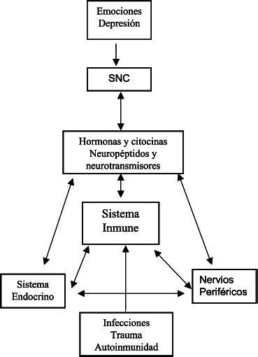 Figura 1. Interacción entre el sistema nervioso central ...