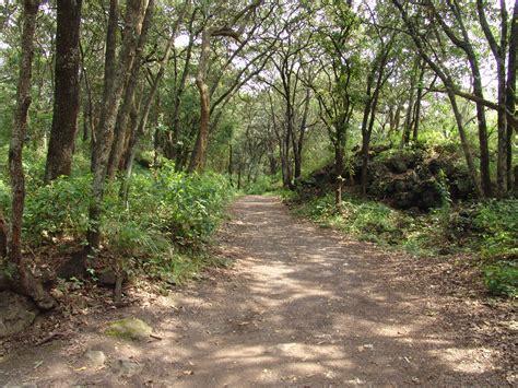 File:Bosque de Tlalpan, paisajes. 01.JPG - Wikimedia Commons