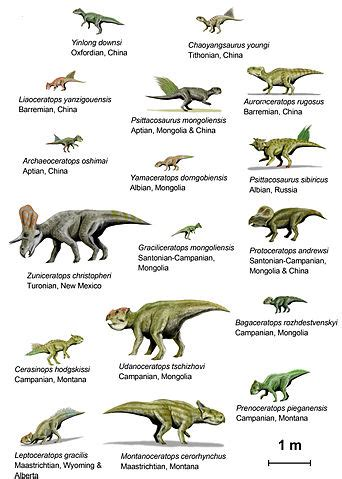 File:CeratopsiaI BW.jpg - Wikipedia