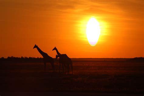 File:Etosha National Park, Namibia  2863455274 .jpg ...