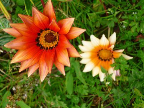 File:Flowers, Costa Rica - 2.jpg - Wikimedia Commons