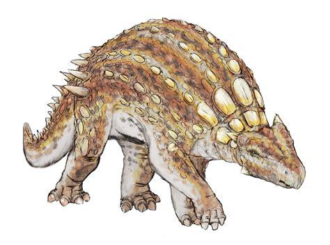 File:Minmi paravertebra dinosauria.png   Wikipedia
