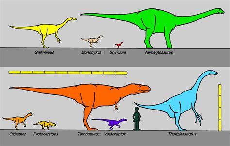 File:Mongolian campanian dinosaurs 8426.JPG - Wikimedia ...