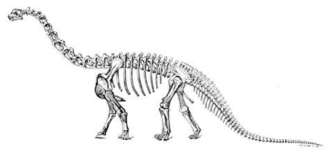File:Sharp naturalhistory1921 camarasaurus.jpg - Wikimedia ...