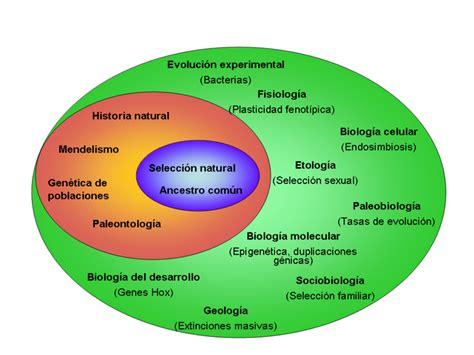 File:Teoría Síntética ampliada.png   Wikimedia Commons