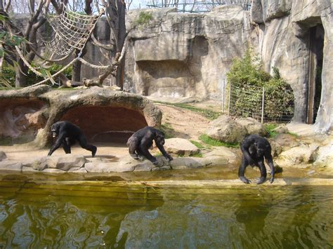 File:Zoo de Barcelona - micos.JPG - Wikimedia Commons