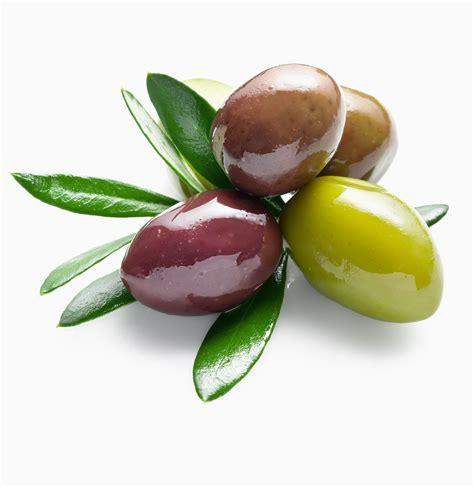 Finca San Quintí   Aceite de oliva virgen extra, Aceitunas ...