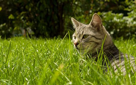 Find the cat in the grass wallpapers and images ...