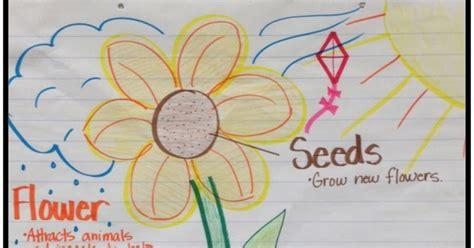 First Grade Fanatics: Plant Life Cycles