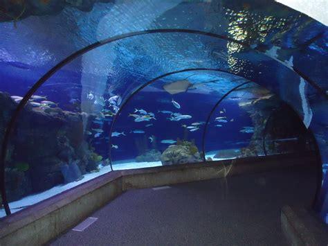 fish aquarium zoo   Exploring Omaha: Scott Aquarium  Henry ...