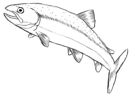 Fish Drawing Pictures ~ Drawing Pictures