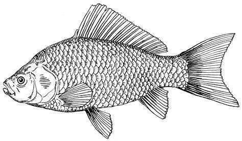 Fish Drawings | ... Wallpapers 4 u Free Download: Cute ...