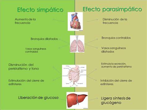 Fisiología Básica grupo III-5: Funciones de sistema ...