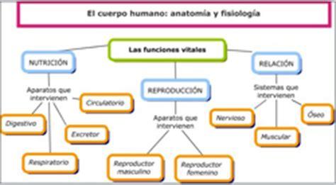 Fisiologia De Aparatos Y Sistemas | apexwallpapers.com