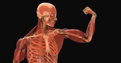 Fisiología (I): el cuerpo humano - Biología
