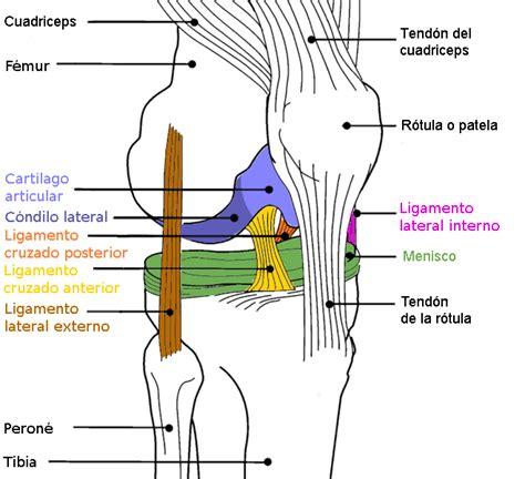 Fisioterapia: Articulacion FemoroTibial