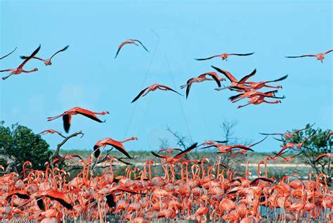 Flamenco animal volando - Imagui