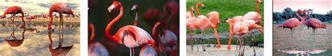 FLAMENCOPEDIA » Flamencos. Enciclopedia Especializada