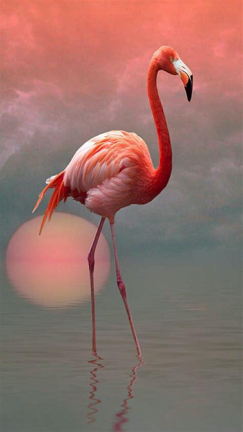 Flamingo | ALIT@S | Pinterest | Flamingo, Pink flamingos ...