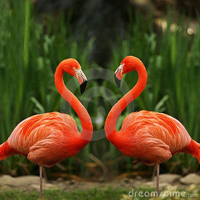 Flamingo Bilder. Flamingo