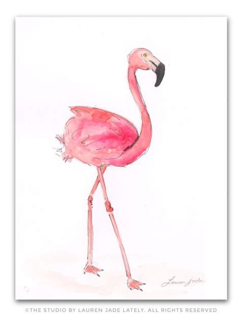 Flamingos, Watercolor illustration and The studio on Pinterest