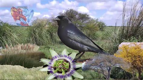 Flora y Fauna de Entre Ríos   YouTube