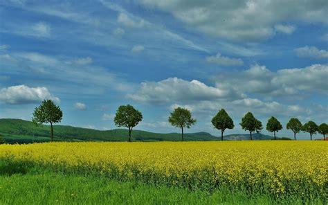 Flores Amarillas árboles verdes Cielo fondos de pantalla ...