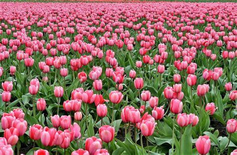 Flores | Características, tipos, variedades, clases ...