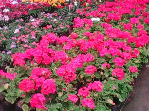Flores De Estación , Plantas Ornamentales , Arboles ...