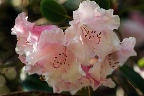 Flores de Invierno: 5 especies para tener en casa - COSAS.PE