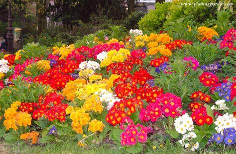 flores de invierno   Plantas & Jardín