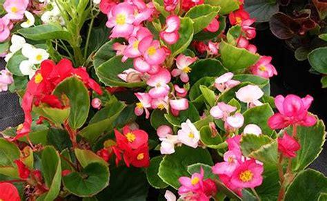 Flores de temporada del taller ocupacional de floricultura ...