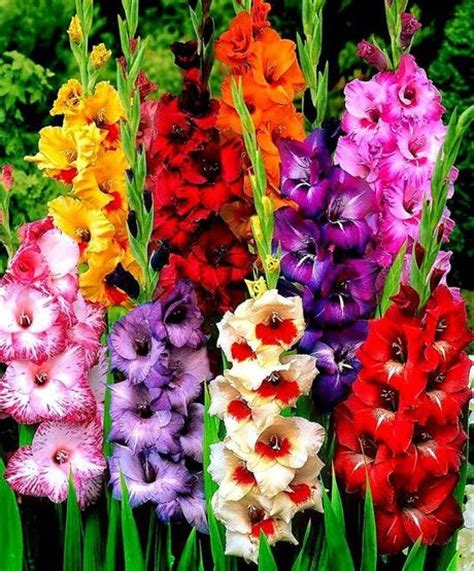 Flores de temporada: Primavera   Paperblog