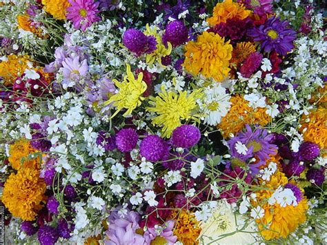 Flores día de muertos   México 2003   Flickr   Photo Sharing!