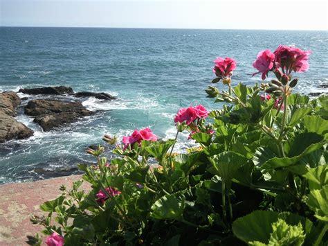 Flores frente al mar 2/2 by invaderjavi on DeviantArt