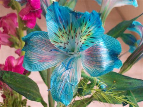Flores Hermosas , mis preferidas !   Imágenes   Taringa!