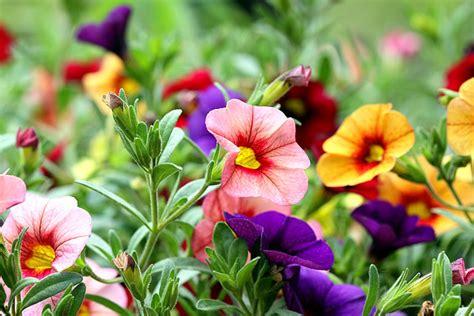 Flores   Imágenes y Fotos